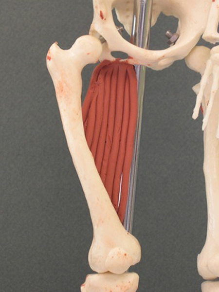 Adductor Magnus | Feet...